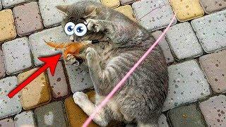 КОТ МАКС ВПАЛ В ДЕТСТВО Трюки с игрушкой Эти смешные коты