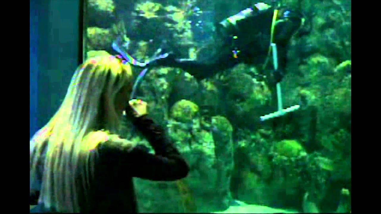 Moody Gardens Aquarium Hours Garden Ftempo