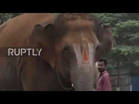 TONNES of fun! Indian temple elephants treated to 48-day spa