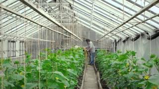 Gärtnerei Malz in Glauchau - Blumen und Pflanzen