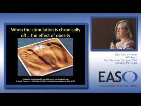 Brown adipose tissue in obesity: Importance in humans vs rodents
