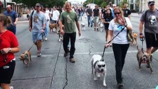 Texas Sized Pittie Pride PARADE - Austin Texas - Nov 6th 2011- www.LOVE-A-Bull.org