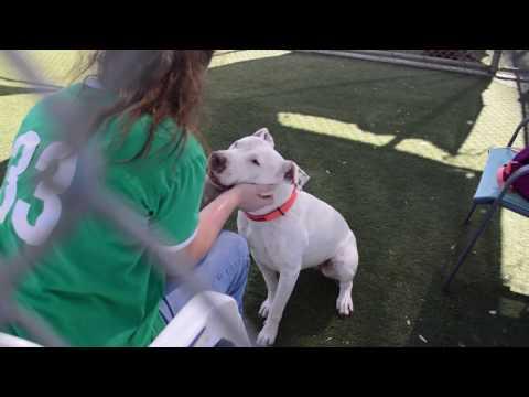 San Luis Obispo County Animal Services