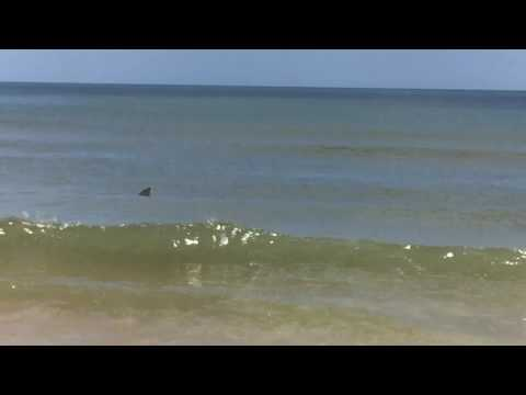 Family Vacation Sharks in the Water St. Augustine Beach June 2016