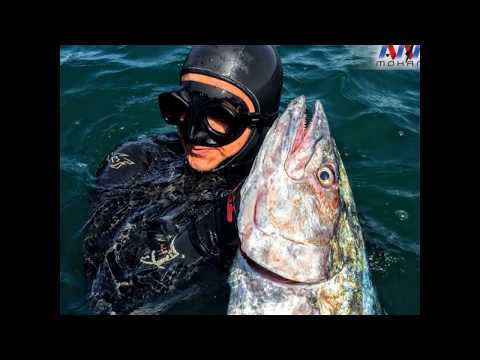 Spearfishing in Egypt by Amr Mohamed Ep1