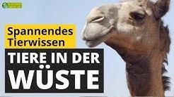 Tiere in der Wüste: Wie überleben Tiere die Hitze? - Tier-Doku für Kinder