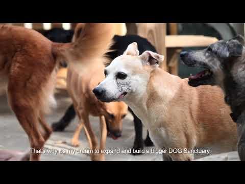 Foundation DOG starts with Sanctuary - Stichting DOG Curaçao