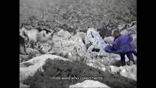5-летний Модрич в документальном фильме о волках в городе Есеницы