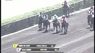Vidéo de la course PMU DESTEMPLADO