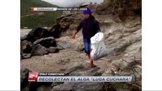 Chile Conectado - En busca de la Luga Cuchara