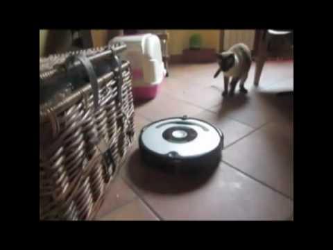 Gatti Vs Roomba: incontri ravvicinati di un certo tipo