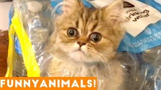 Funniest Pets of the Week Compilation January 2017  Funny Pet Videos