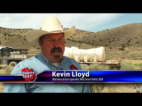 The County Seat   Wild Horse and Burro update