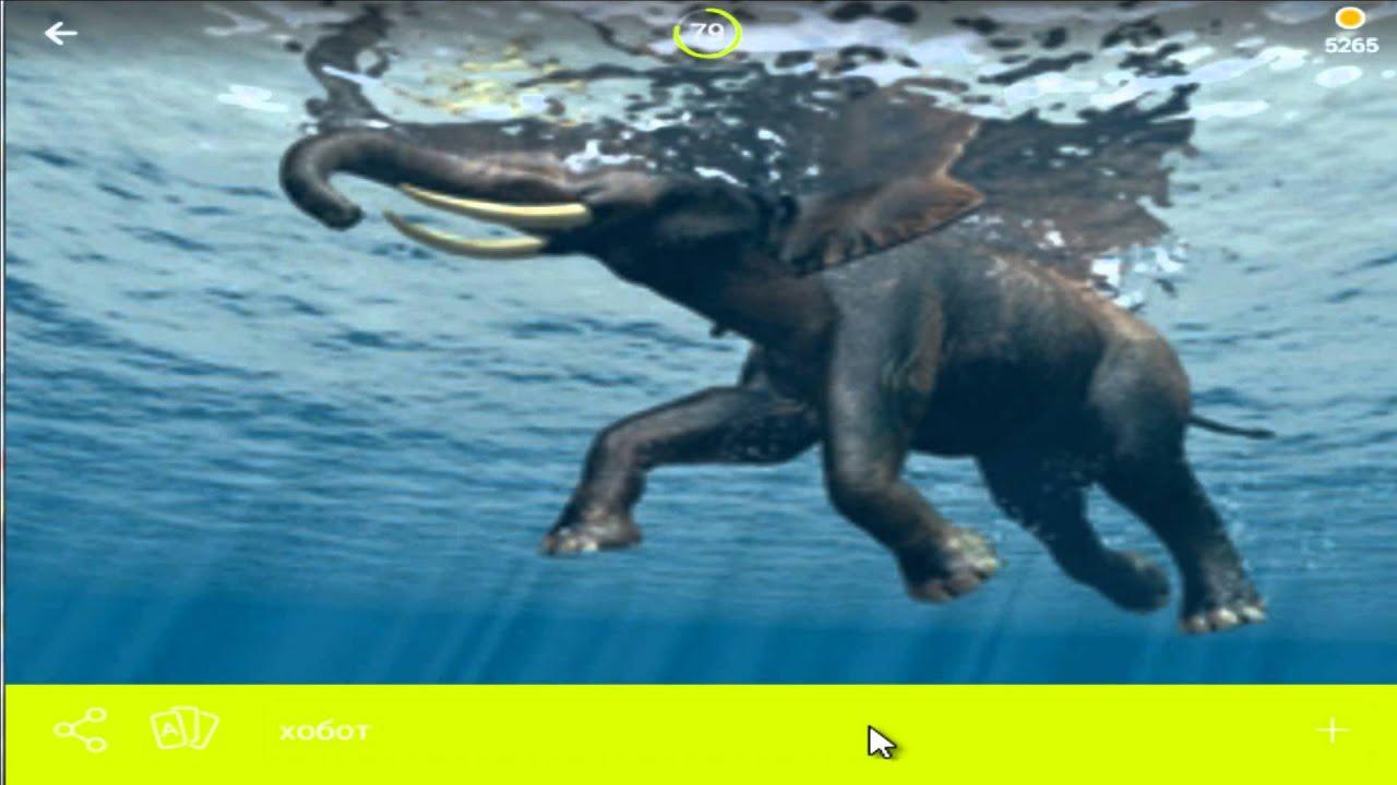 игра 94 процента уровень 72 картинка слон плывет по воде ...