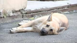 Служба по отлову бездомных собак ответила на жалобы казанцев