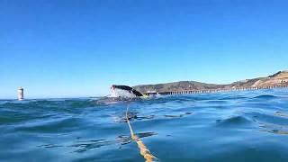 Avila Beach Solo Open Water Ocean Swim