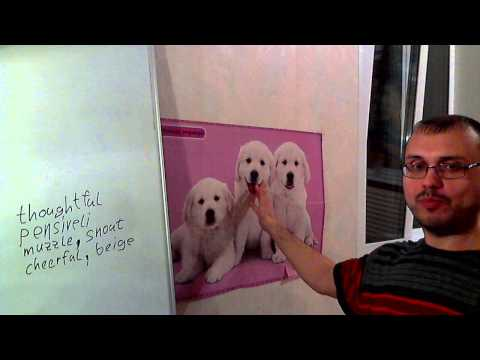 Как описать собаку на английском языке