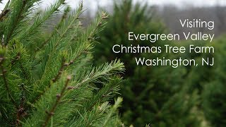 Visiting Evergreen Valley Christmas Tree Farm