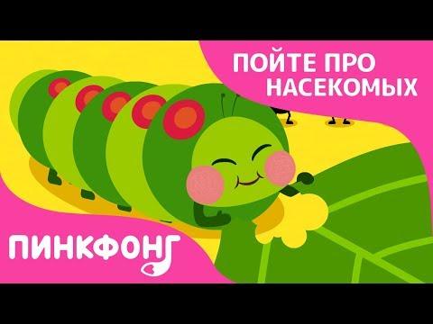 Голодные гусеницы   Песни про насекомых   Пинкфонг песни для детей