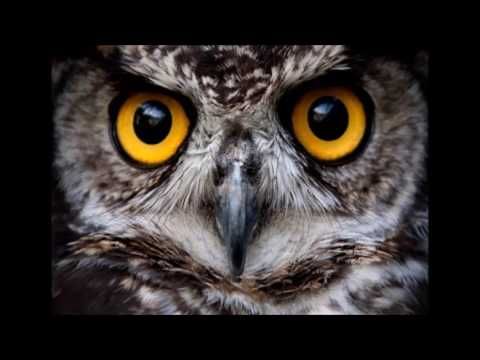 Matt Lynch ~ Somebody watching me (Original) [Raw recording]