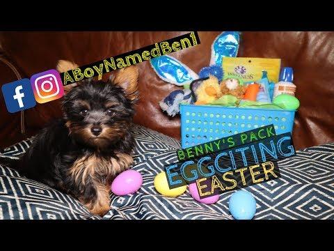 easter-egg-hunt-with-benny's-pack---a-boy-named-ben---episode-6