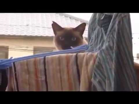 Ушел по английски или Неудачный паркур кота! Самый прикол в конце  Прикол, юмор, смешно  Эти смешные