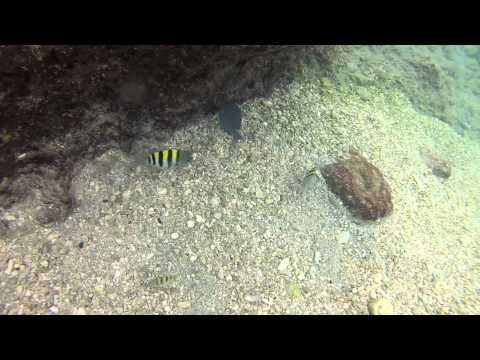 Swimming with Tarpon - Georgetown, Grand Cayman 9/20/12