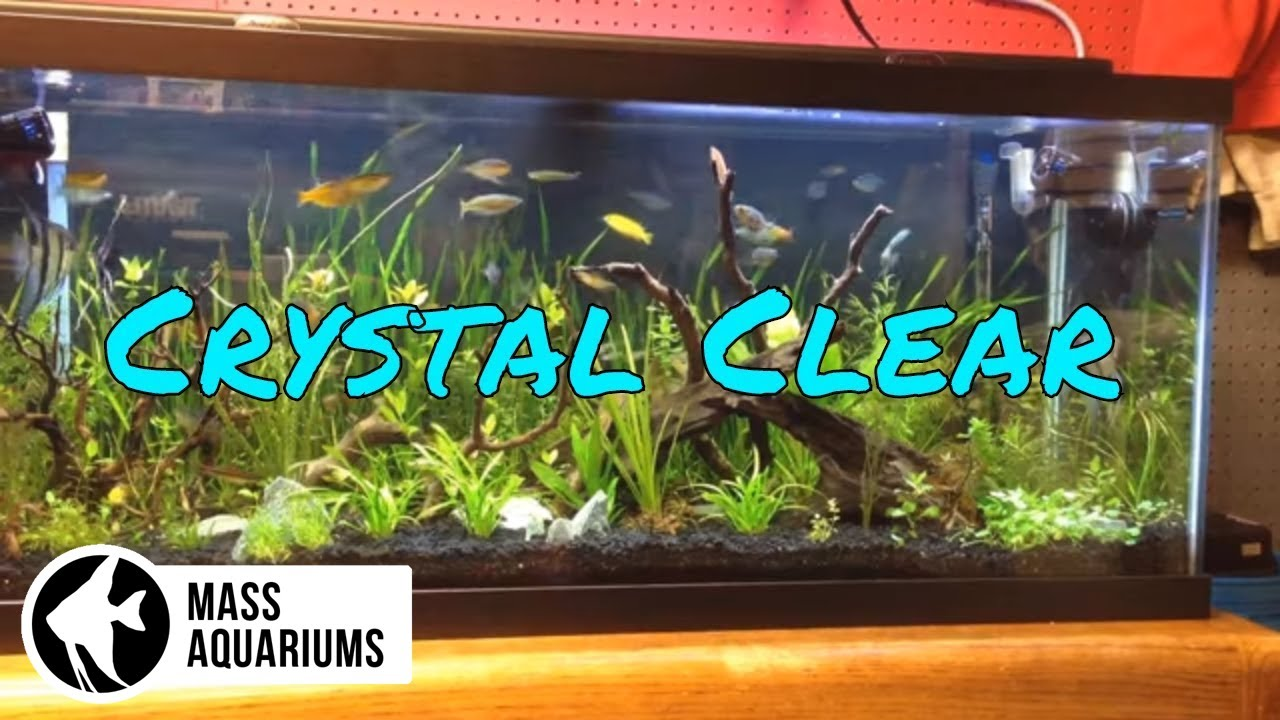 how to keep crystal clear water in your aquarium clean