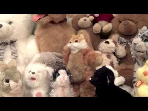Catnip Style (Gangnam Style Parody)