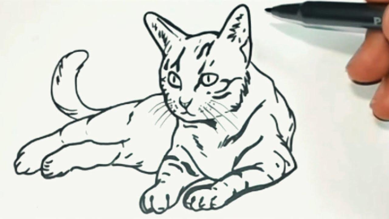 Como Desenhar Um Gato Youtube