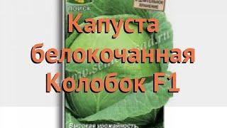 Капуста белокочанная Колобок F1 (kolobok f1) 🌿 обзор: как сажать, семена капусты Колобок F1
