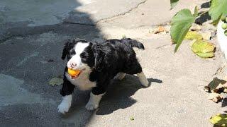 Dog Training - House Training Your Dog