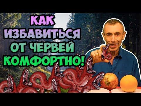 Kaip atsikratyti organizme esančių kirmėlių? Parazitai, kirminai