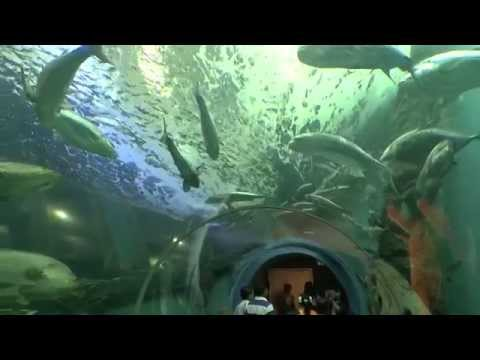 Thailand - Rayong Aquarium