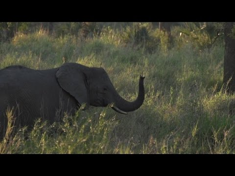 Animals endangered by unrest in Mozambique's Gorongosa Park