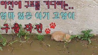 아기 고양이 구조  -kitten rescue