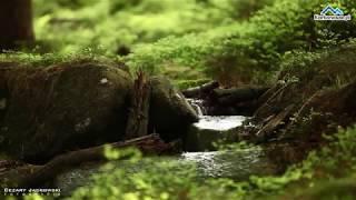 Wiosna w karkonoskim lesie