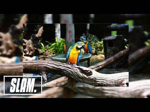 Bob Marley - Three Little Birds (Ricky Mears Remix) | SLAM Music