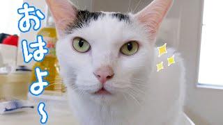 パパとママに挨拶してから寝る賢いお喋り猫チロさん
