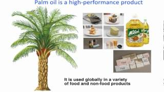 Palm Oil : One Plant Stands Tall
