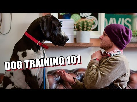 How to teach any dog to walk on the leash- Dog Training with America's Canine Educator