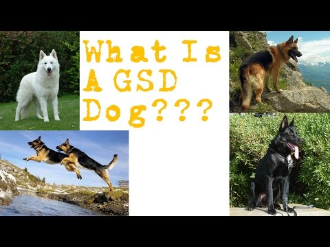 What Is A German Shepherd?