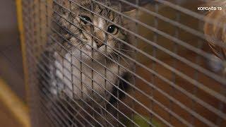 12 кошек нашли новых хозяев за неделю: приют