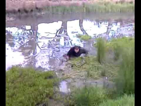 Greg stuck in the Mud