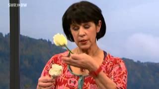 Schöne Deko mit gewachsten Rosen | SWR Kaffee oder Tee