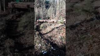 Exploatare forestiera in germania(2)