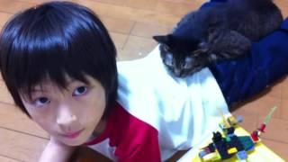 息子の命を救おうとした猫 thumbnail