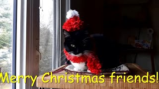 #Cat, #Hat, Photos and the hap…