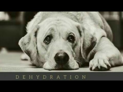 Dehydration Problem In Dogs