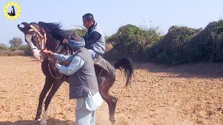 3 day horse training.